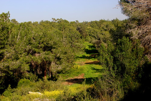 Carmel Forest