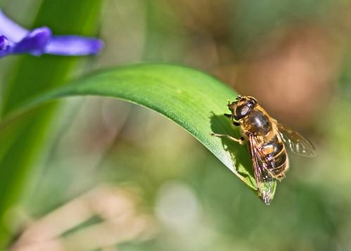 Bee 1/3