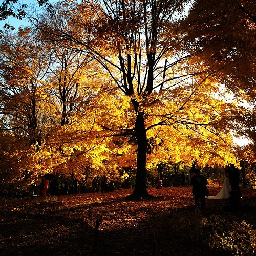 Autumn comes to Central Park