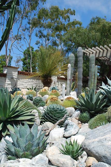 rock & cactus garden