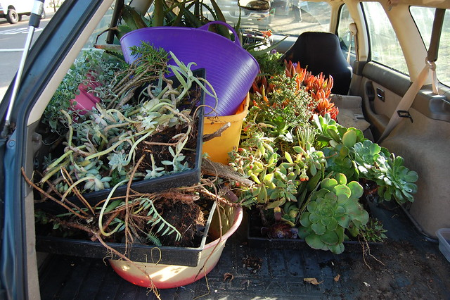 Car full of succulents.