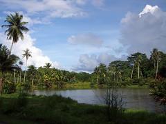 Pond. Pulau Ubin