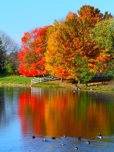 Free Fall Screensavers And Wallpaper Kentwood Autumn Vertical Flickr Photo Sharing