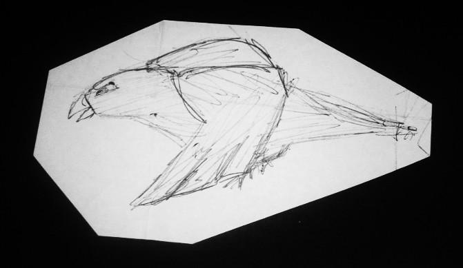 A Doodle Bird