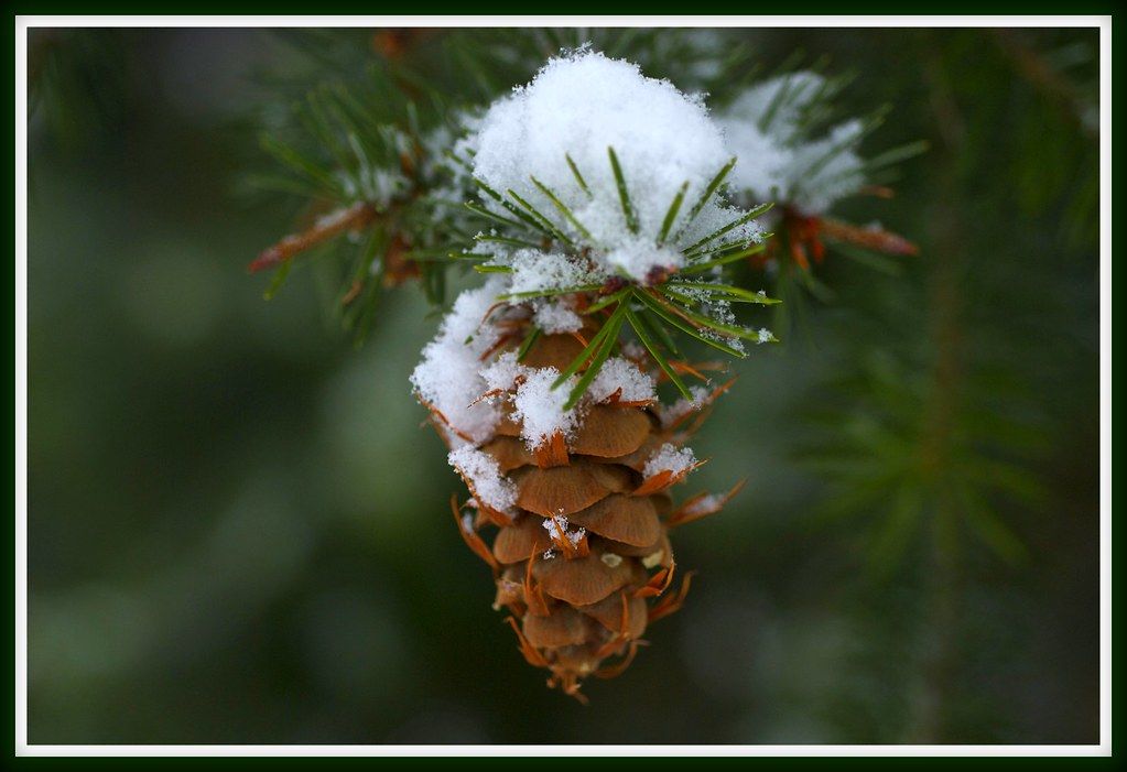 Decorated fir cone