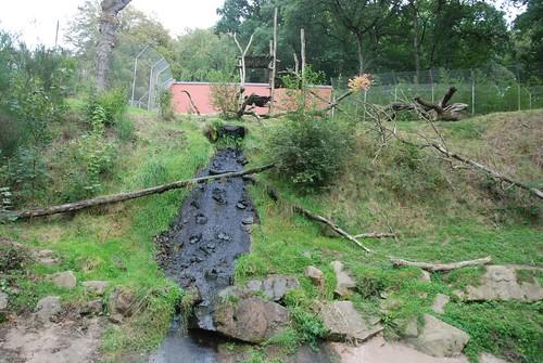 Malaienbärenanlage im Zoo de Trégomeur