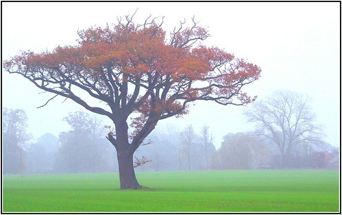 Oak in the mist: EXPLORED!