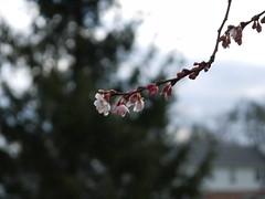 tree flowers in december