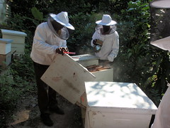 11.11.11 - Beekeeping in St. Thomas