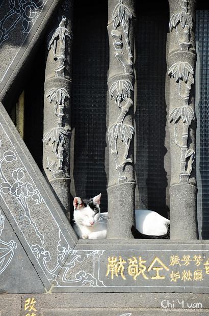 古寺有貓05.jpg