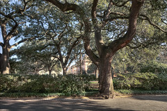 Savannah Square 2