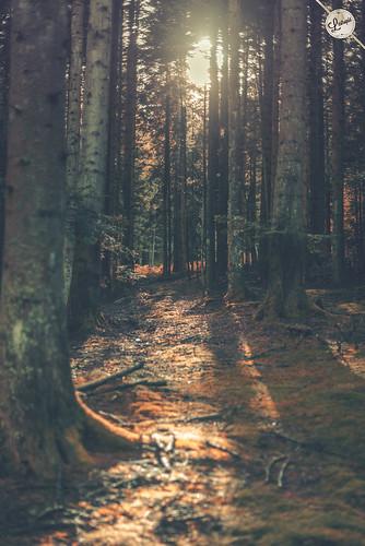 sun nature forest landscape lost woods nikon hip inspire 50mmf14 d800 nikond800 lestropié