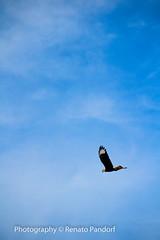 Spread your wings - II
