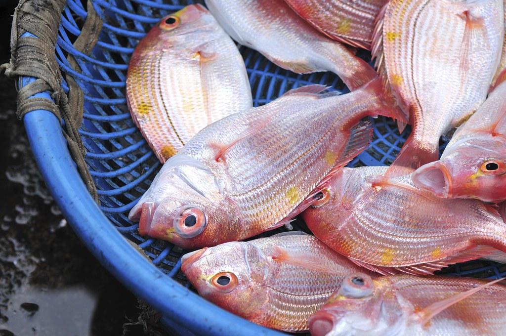 fishing port Daxi 38