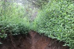 "Pendakian Sakuntala Gunung Argopuro Juni 2014 • <a style=""font-size:0.8em;"" href=""http://www.flickr.com/photos/24767572@N00/26556155374/"" target=""_blank"">View on Flickr</a>"