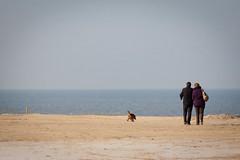 Coxyde Février 2012 - 2 promeneurs et un chien