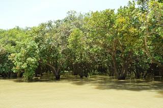 lac tonle sap - cambodge 2014 18
