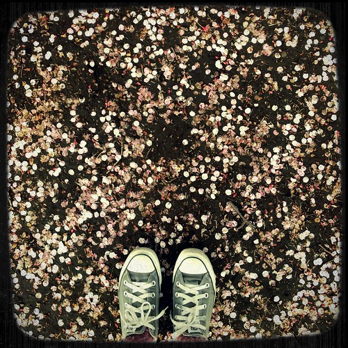 Cherry Blossoms in Shinjuku Gyoen Park
