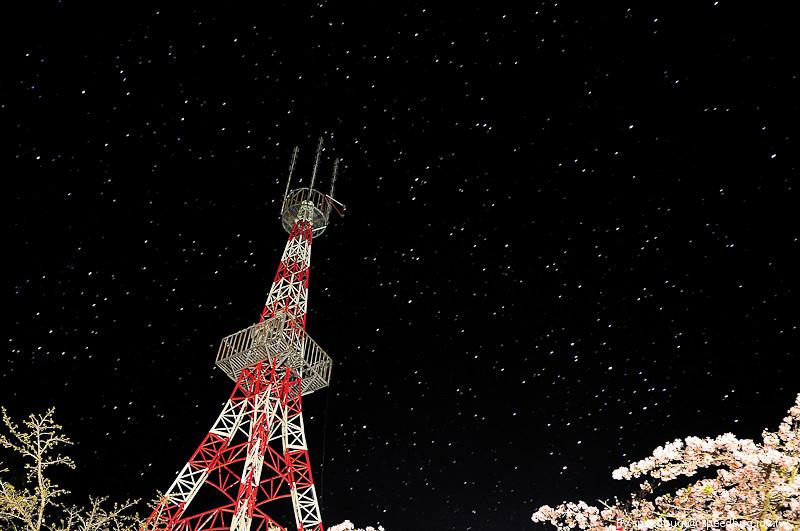 阿里山櫻花季9