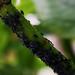 Många bladlöss att ta hand om!
