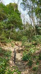 獅子ヶ谷市民の森(大六天通り)(Dairokuten Ave., Shishigaya Community Woods)