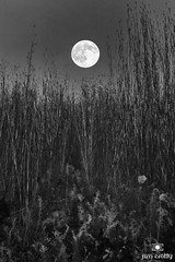 Hunters Moon in black and white by Jim Crotty