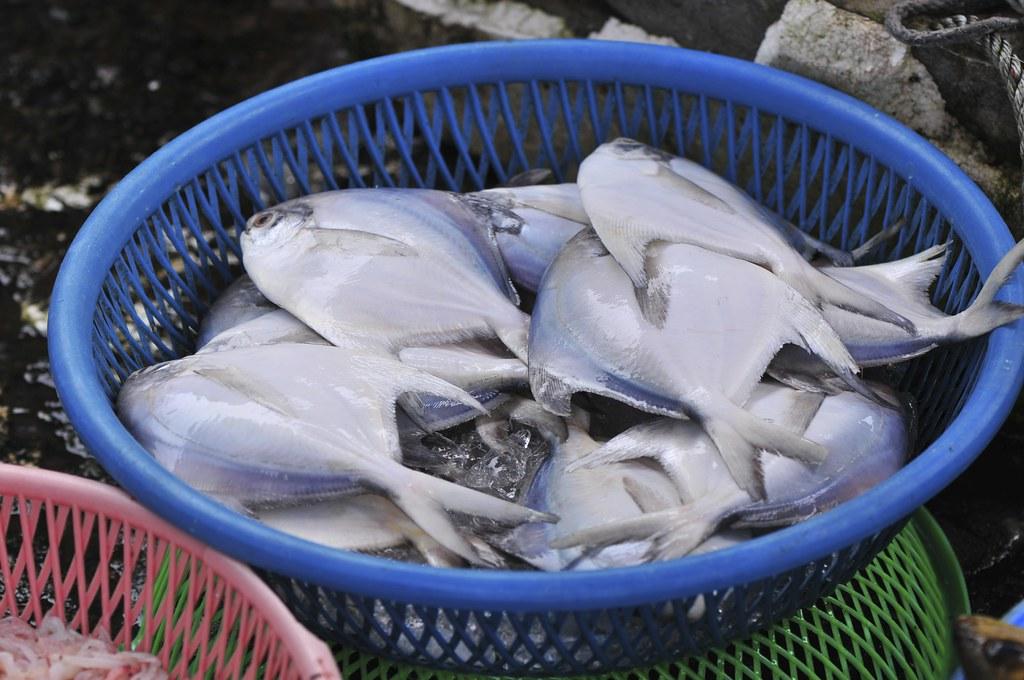 fishing port Daxi 47