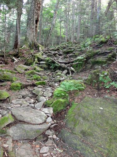 Glencliff Trail climb of Mt. Moosilauke on NH Appalachian Trail