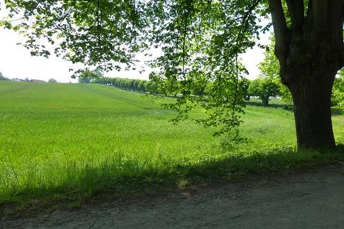 Wismar maj 2012077