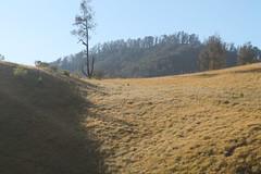"Pendakian Sakuntala Gunung Argopuro Juni 2014 • <a style=""font-size:0.8em;"" href=""http://www.flickr.com/photos/24767572@N00/27161304675/"" target=""_blank"">View on Flickr</a>"