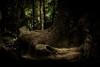 Photo:kasugayama primeval forest at nara japan. 春日山原始林 奈良 By
