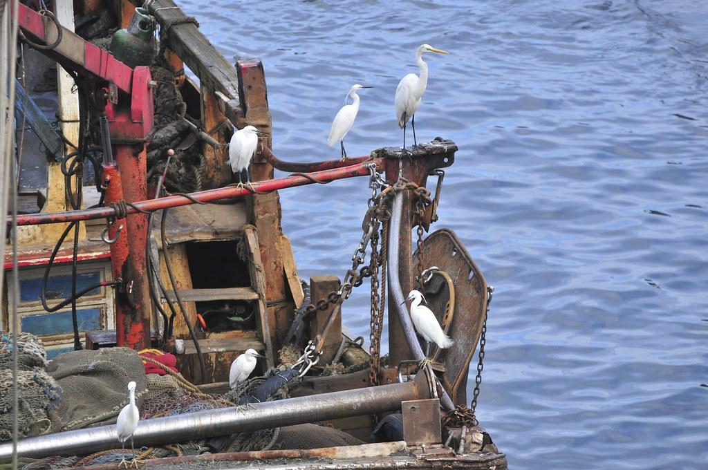 fishing port Daxi 102