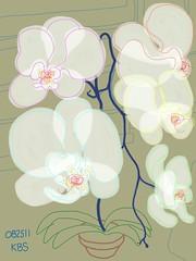 082511 White Orchid 16E