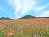 Photo:【埼玉県 5月 イベント特集】 ディー・ノイシ_Walkerplus By