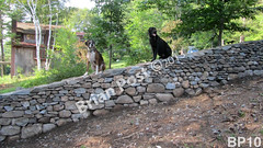 WM Brian Post 10, flat cap stones, freestanding wall, dry laid stone construction, copyright 2014
