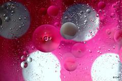 Thema 2016 Water en olie