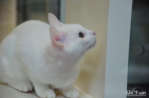 小小白貓三胞胎04.jpg