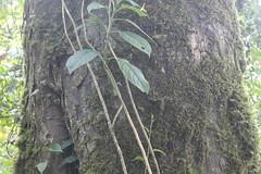 "Pendakian Sakuntala Gunung Argopuro Juni 2014 • <a style=""font-size:0.8em;"" href=""http://www.flickr.com/photos/24767572@N00/27093528931/"" target=""_blank"">View on Flickr</a>"