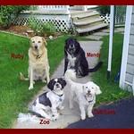 Ruby, Mandy, Zoe and Dutchess