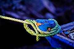 Bleue (Explore)