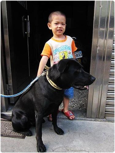 Leafy家居生活館: 2012.1月份待認養犬隻