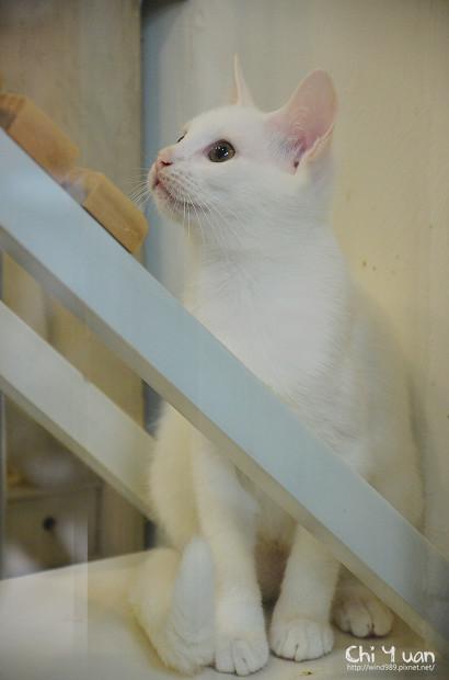 小小白貓三胞胎10.jpg