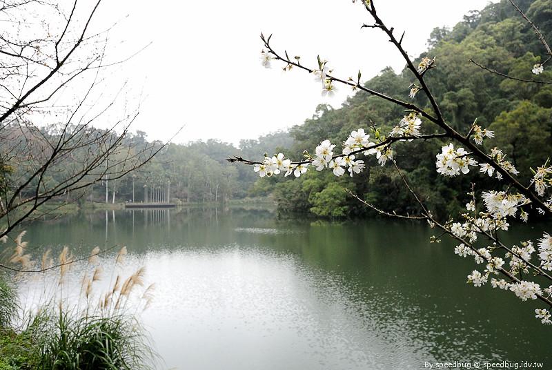 後慈湖 (34)