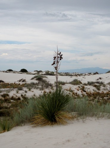 Picture from White Sands National Monument