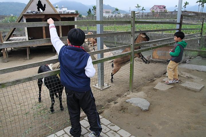【苗栗公館】「棗莊」~免費的動物體驗。「棗」到幸福 - 佑佑皮皮在信誼 - 信誼親子玩家