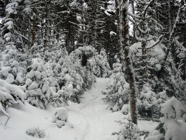 Snowy Garfield Trail
