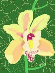071611 Ricardo Siti Orchid