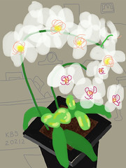 020212 Sis Orchid