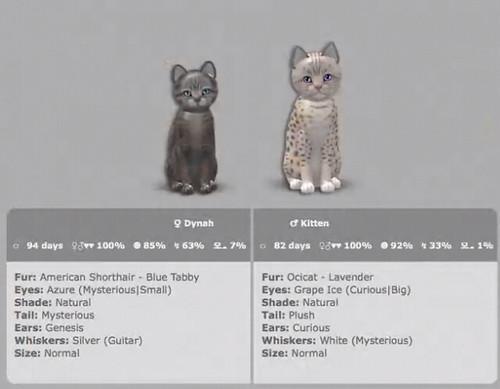 Cat Ladies on the Web