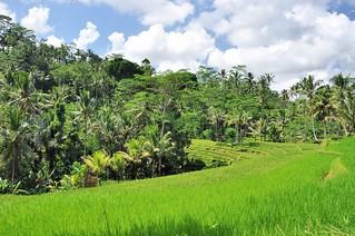 bali nord - indonesie 32
